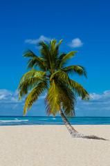 Lonely palm tree on sandy beach on the wild island