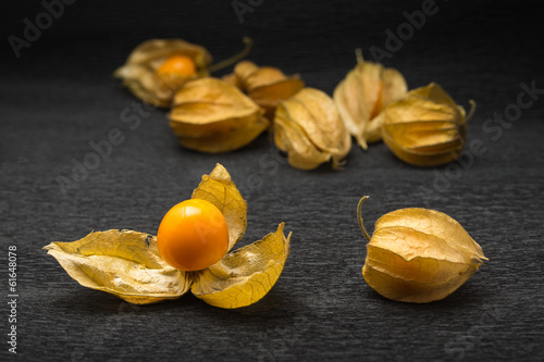 Physalis on a grey background