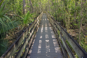 Boardwalk At Slough Preserve