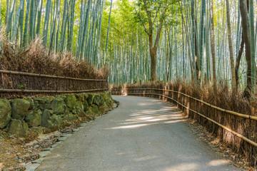 Chikurin-no-Michi (Bamboo Grove) at Arashiyama in Kyoto