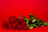 Dozen red roses on a red background