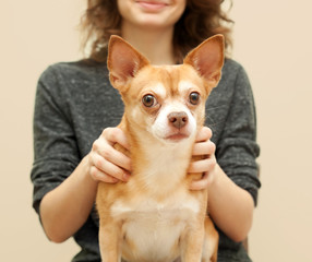 portrait of a beautiful young woman with chihuahua dog in her ar