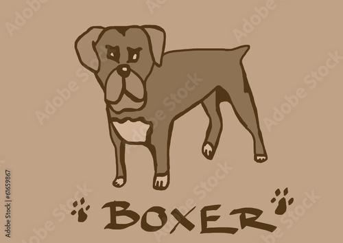 Boxer vintage