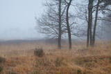 trees on marsh in dense fog