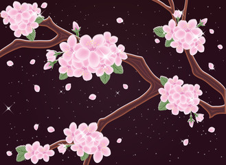 Spring sakura night card, vector illustration