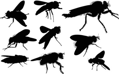 nine fly silhouettes isolated on white
