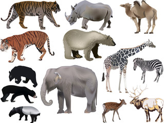 thirteen large animals collection on white