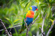 canvas print picture - Colorful Parrot
