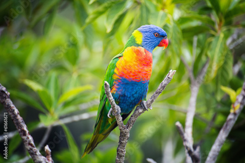 canvas print picture Colorful Parrot