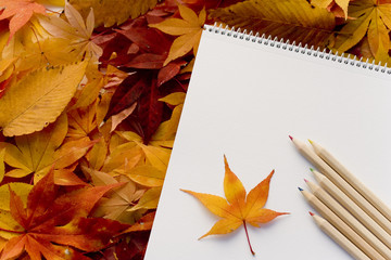 Sketchbook and fallen leaves