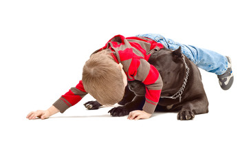 Little boy playing with the dog breed Staffordshire Terrier