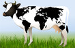 World cow