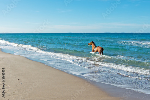 horse at the beach