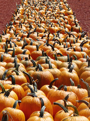 Perspective View of Pumpkin Row