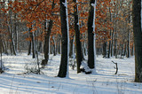 Frozen forest in the winter, Ludogorie, Bulgaria