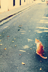 Cat on San Juan Streets