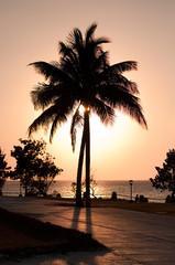 Palmtree Contre-Jour