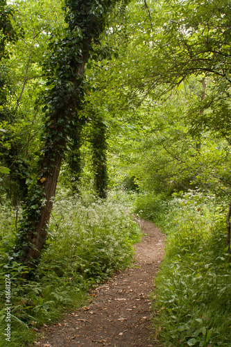 Footpath between trees in summer