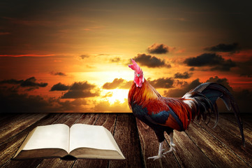 Wake up in morning with rooster crows for read