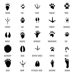 Animal tracks identificator