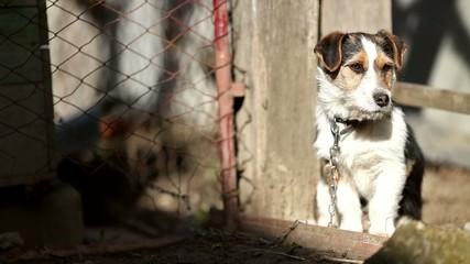 Dog sunbathing at dog shelter