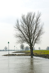 Riverside with tree silhouette and beacons