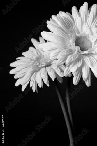White flowers - 01 © Kartouchken