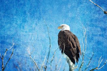 Bald Eagle Blues