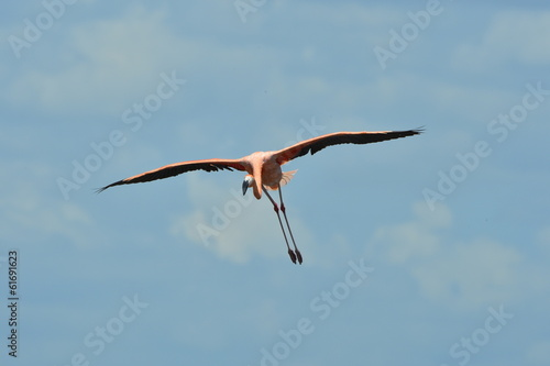 Flying Flamingo