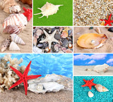 Collage of summer seashells