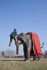 Tamer contest - Elephant festival, Chitwan 2013, Nepal