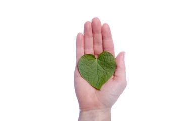 Heart Shaped Leaf in Girls Hand