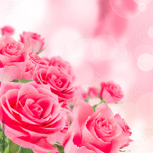 Natural pink roses background