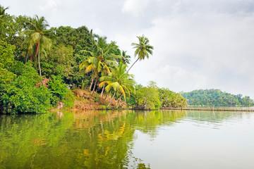 Tropical jungle on the lake