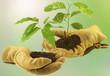 concept bourse d'échange de plantes vertes