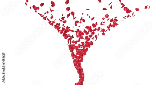 Rose petals Flying