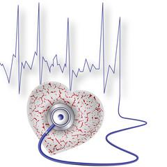 Herz - Kreislauf