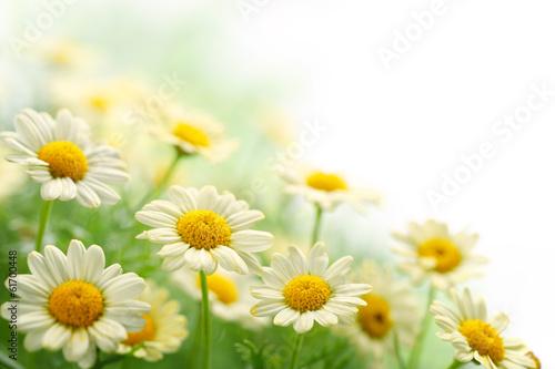Keuken foto achterwand Bloemenwinkel Daisy flower