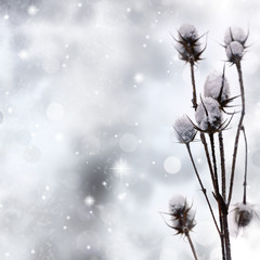 Snow covered plant on sparkle background