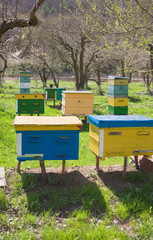 different kinds of beehives situated in the garden