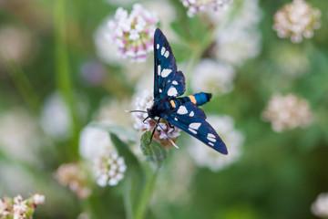 Butterfly. Macro.