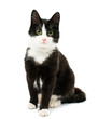 Leinwandbild Motiv Black & white cat