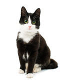 Black & white cat - 61710255