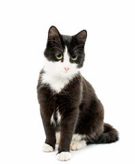Black & white cat
