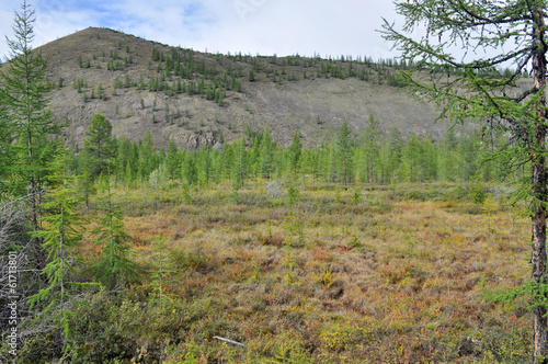 Sparse mountain taiga in Yakutia.
