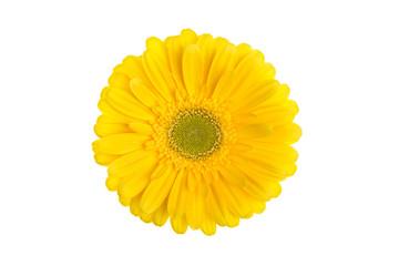 Gelbe Gerberablüte