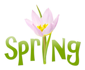 Spring text with flower