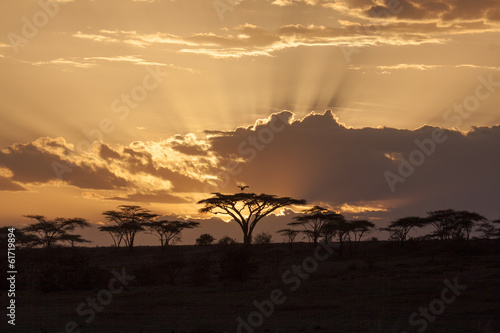 African sunset with acacia and bird