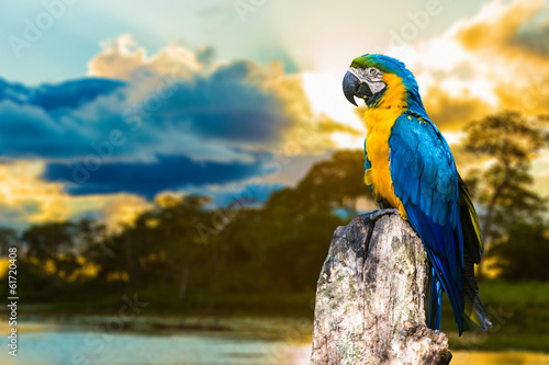 Tuinposter Papegaai Blue and Yellow Macaw in Pantanal, Brazil
