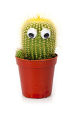 Cactuse in flowerpot with funny eyes isolated on white